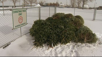 Here's where (and when) you can recycle your Christmas tree