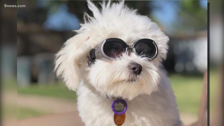 We're celebrating National Pet Day