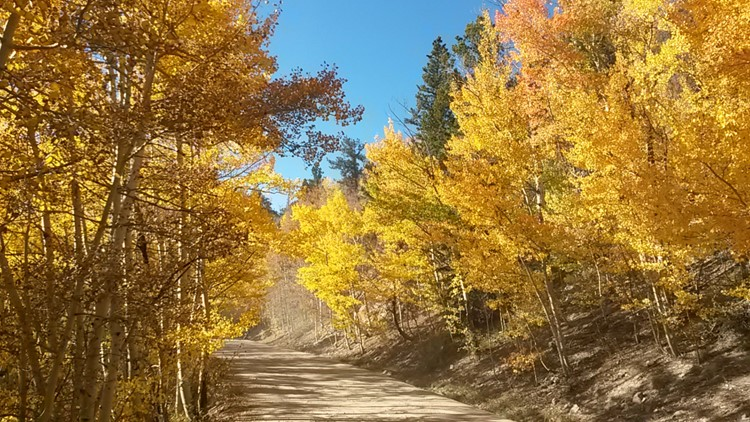 9 best drives to see fall colors in Colorado