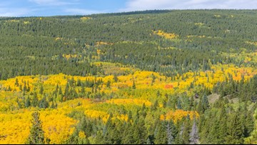 What a warm fall means for Colorado's leaf-peeping season