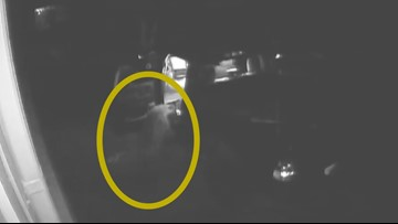 CAUGHT ON CAMERA: Hungry bear breaks into car in Morrison