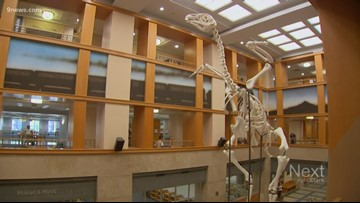 That's not a dinosaur skeleton at Denver Central Library. It's a giant chicken