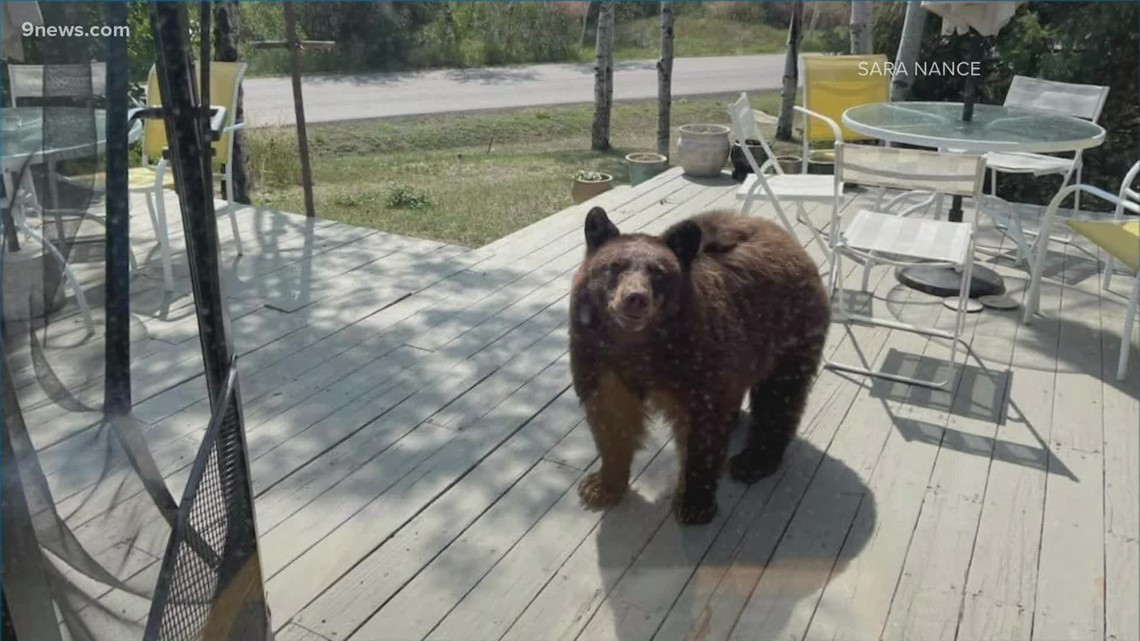 Steamboat Springs neighborhood a frequent target for hungry bears