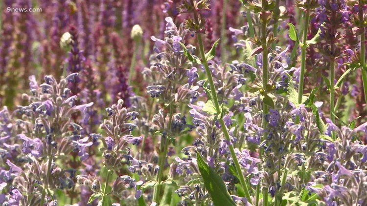 Xeriscape can reduce water use in your garden