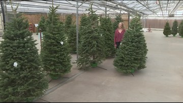 This Colorado garden shop is giving away free Christmas trees to families in need