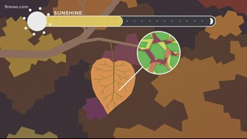 Explaining the science behind fall color leaf change