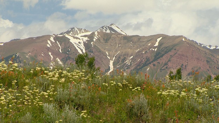 The best hikes to see wildflowers in Colorado this summer