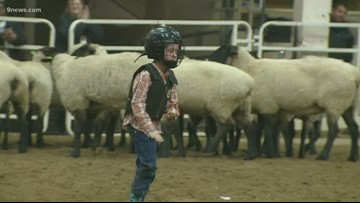 It was Mutton' Bustin' night at the National Western Stockshow