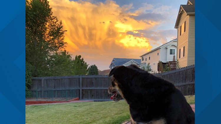 Our Pup Maggie loved taking in the view from her new house in Arvada tonight!