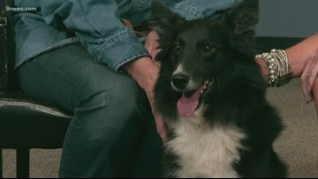 You can give Dusty the border collie mix a second chance at a happy life!