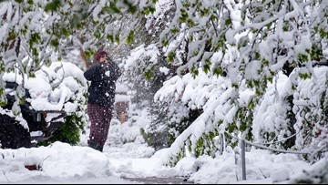 Here's what do about trees damaged by Colorado's late-spring snow storm