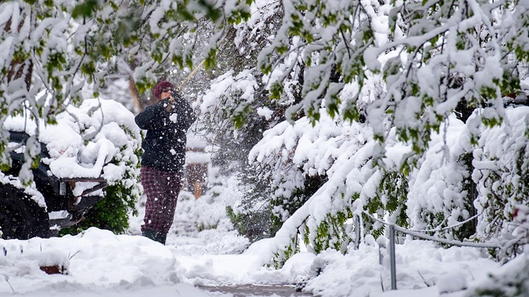 Here's what to do about trees damaged by Colorado's late-spring snow storm