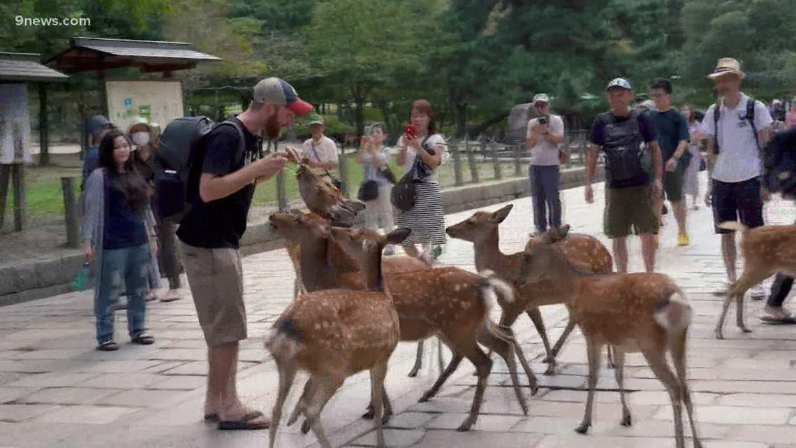 Journey to Tokyo: Deer Park is home to 1,400 wild deer