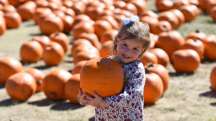 Punkin Chunkin Colorado City of Aurora pumpkin patch pumpkins kid fall festival
