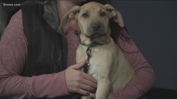 Petline 9: Julian the puppy is looking for a forever home