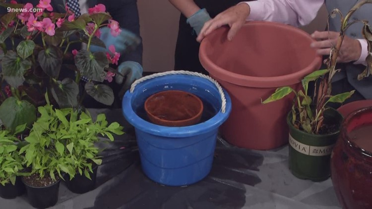 Moving a plant to a larger pot sounds simple (it's not)