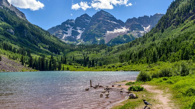 White River National Forest campgrounds  A flock of geese playing in spring Maroon Lake at base of Maroon Bells, Aspen, Colorado, USA.