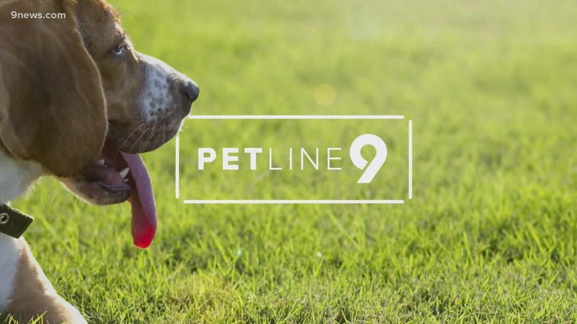 Petline 9: Maggie Mae the cat needs a forever home