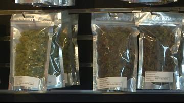 9news.com - Anusha Roy - Colorado bill would allow doctors to prescribe medical marijuana instead of prescription painkillers