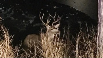 Buck rescued from frozen Colorado Springs pond