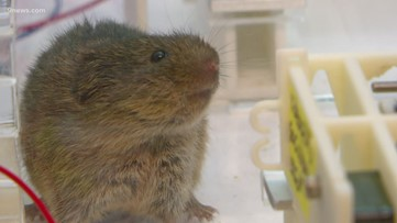 Storytellers: What rodents can teach us about love