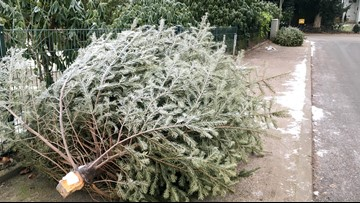 Where and when you can recycle your Christmas tree in Colorado