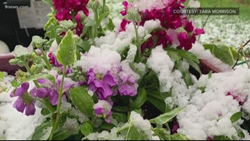 Tips to keep your plants safe from spring snow