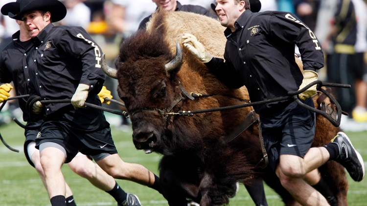 CU's Ralphie makes All-Time greatest mascot list