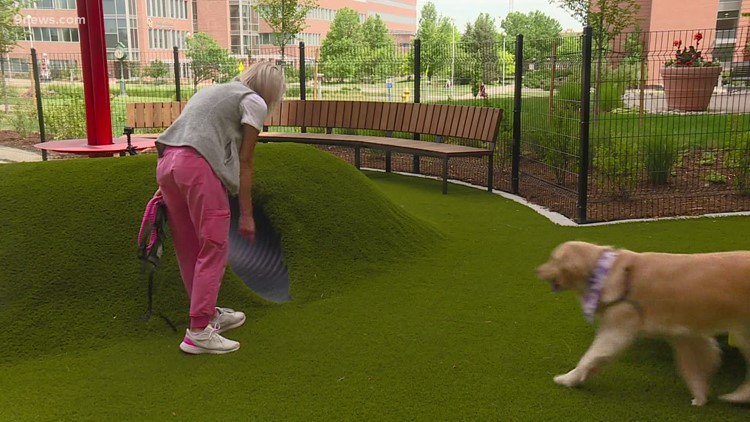 WATCH: Medical dogs get a break 'room' at Children's Hospital Colorado