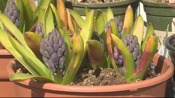 Proctor's Garden: Green light to garden