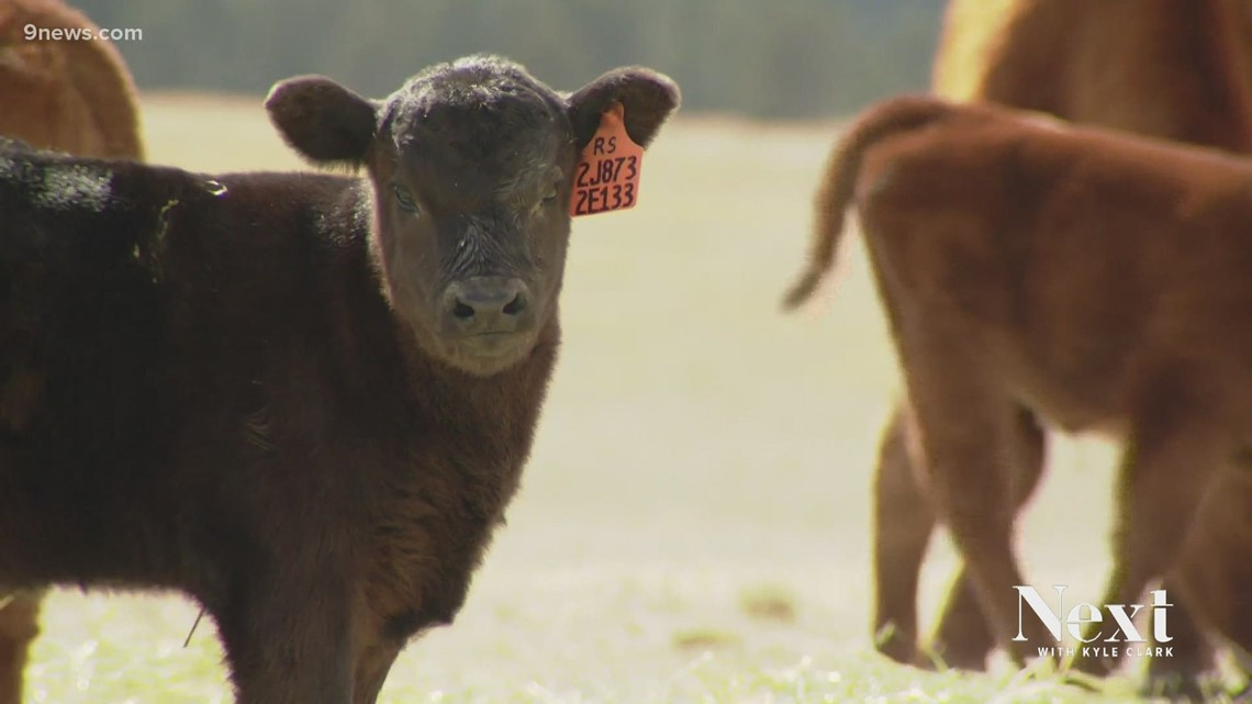 Why Colorado agriculture groups oppose Initiative 16, an animal cruelty proposal