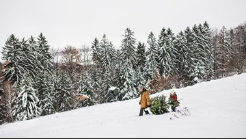Where you can cut down your own Christmas tree in Colorado and how it works