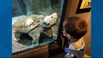 Bob, the 175-pound turtle at the Denver Zoo, has died