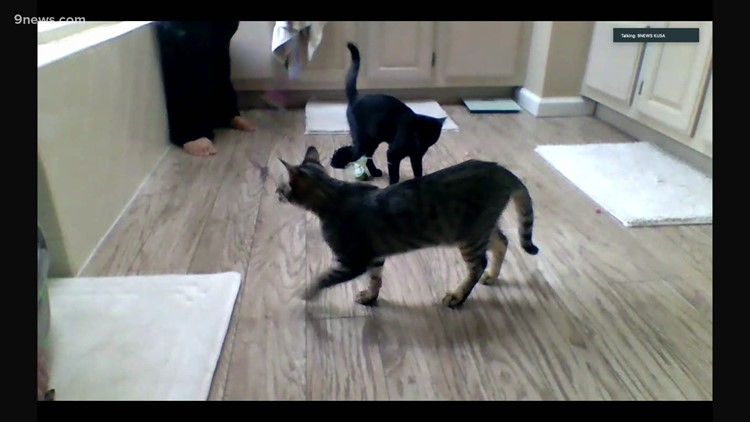Petline9: 2 tabby kittens need a forever home