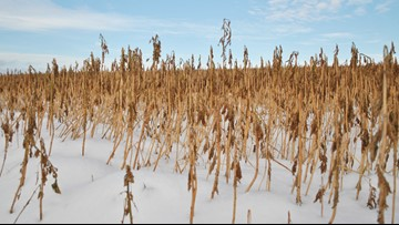 Winter crops may cause unintended warming, study says