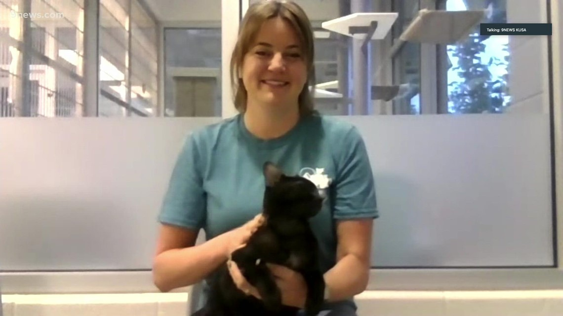 Petline: Kitten available for adoption