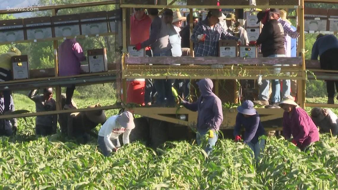 Propuesta de ley busca acabar con explotación de  trabajadores agrícolas en Colorado