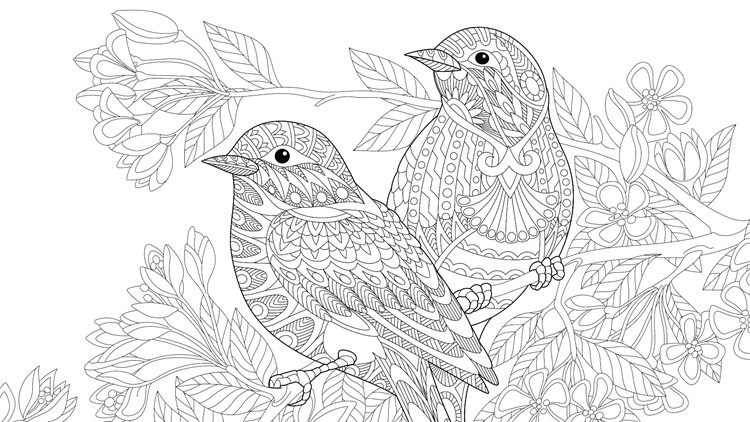 Two birds sitting on a cherry blossoming tree branch. Freehand sketch for adult coloring book page.