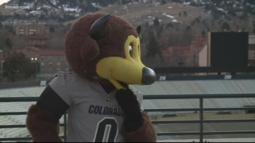 Chip the Champion: CU's mascot brings home 3rd national title