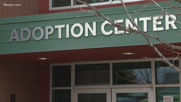 Dumb Friends League suspends adoptions during Denver stay-at-home order