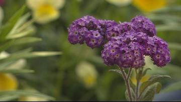 Proctor's Garden: Time to start your fertilization program