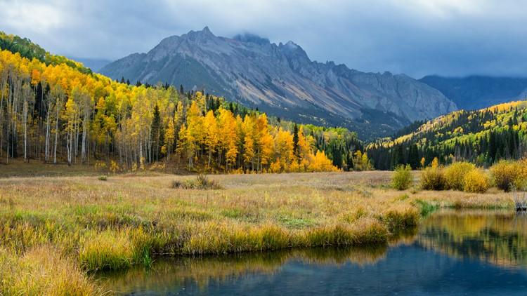 Early Morning Autumn Aspen along Ridgway Colorado County aspen leaves fall