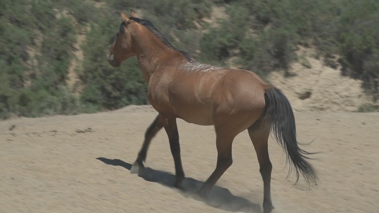 Sisters fight to protect wild horses in northwest Colorado