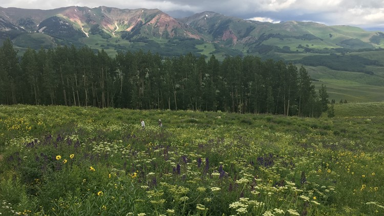 Snodgrass Trail in Crested Butte