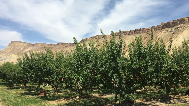 Orchards and Mount Garfield