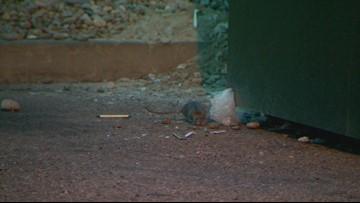Rental company admits to rat problem, promises changes at Denver apartment complex