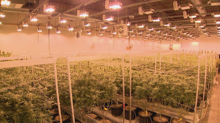 What one local marijuana grow is doing to lessen its carbon footprint