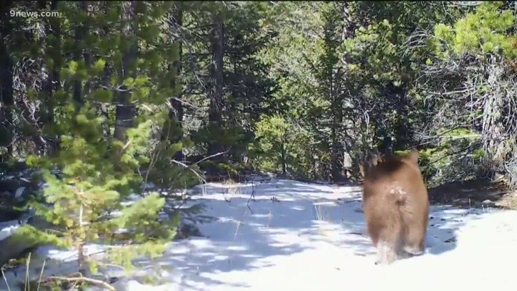 Human remains found in stomachs of bears suspected in fatal attack