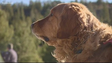 Dogs get ready for avalanche season with special training in Summit County