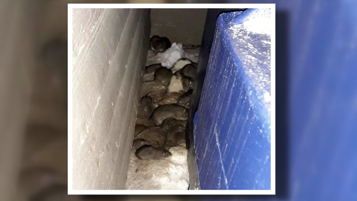 Multiple rat sightings lead to $3,469 in fines for owner of southeast Denver apartment complex